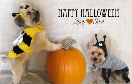 Cute Pet Halloween Costumes
