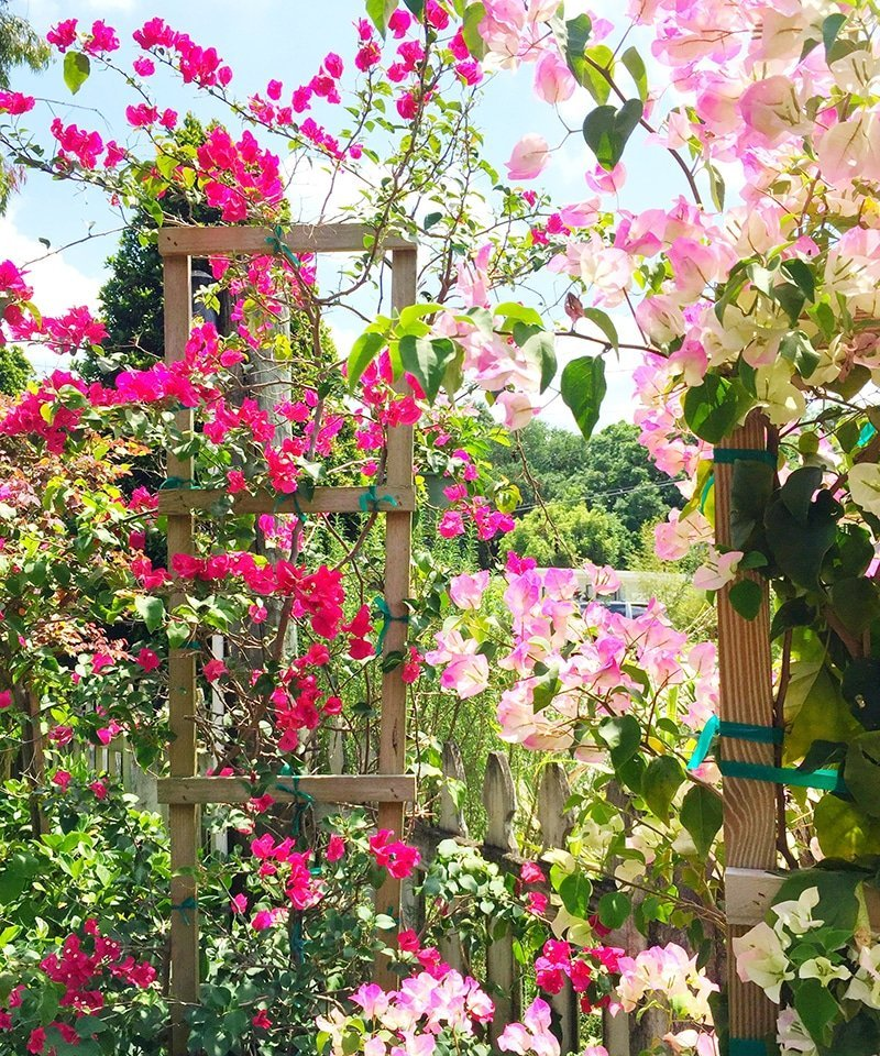 Ashley Brooke Designs - bougainvillea