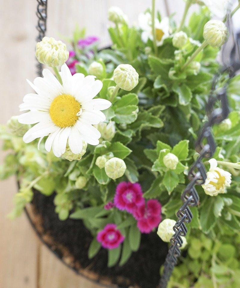 ashley-brooke-designs-backyard-flowers
