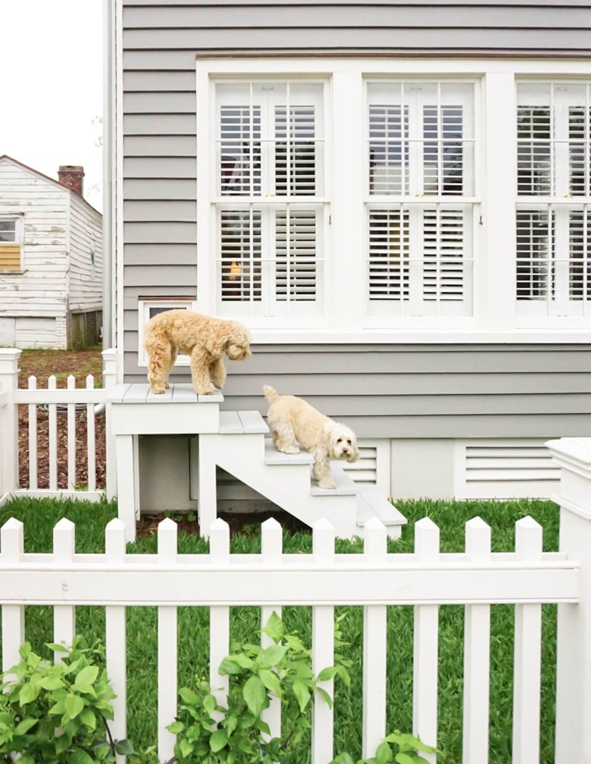 Ashley Brooke Designs is greeted by pups Gus and Sully at 86 Cannon in Charleston, SC