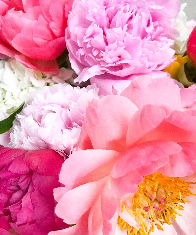 Pretty Pink Peonies | Blogger Ashley Brooke | www.ashleybrookedesigns.com