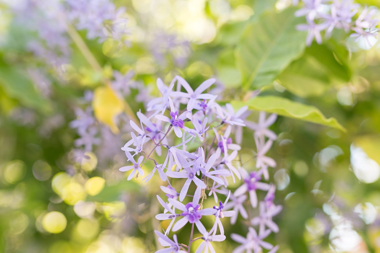 The prettiest purple flowers in Orlando. | www.ashleybrookedesigns.com