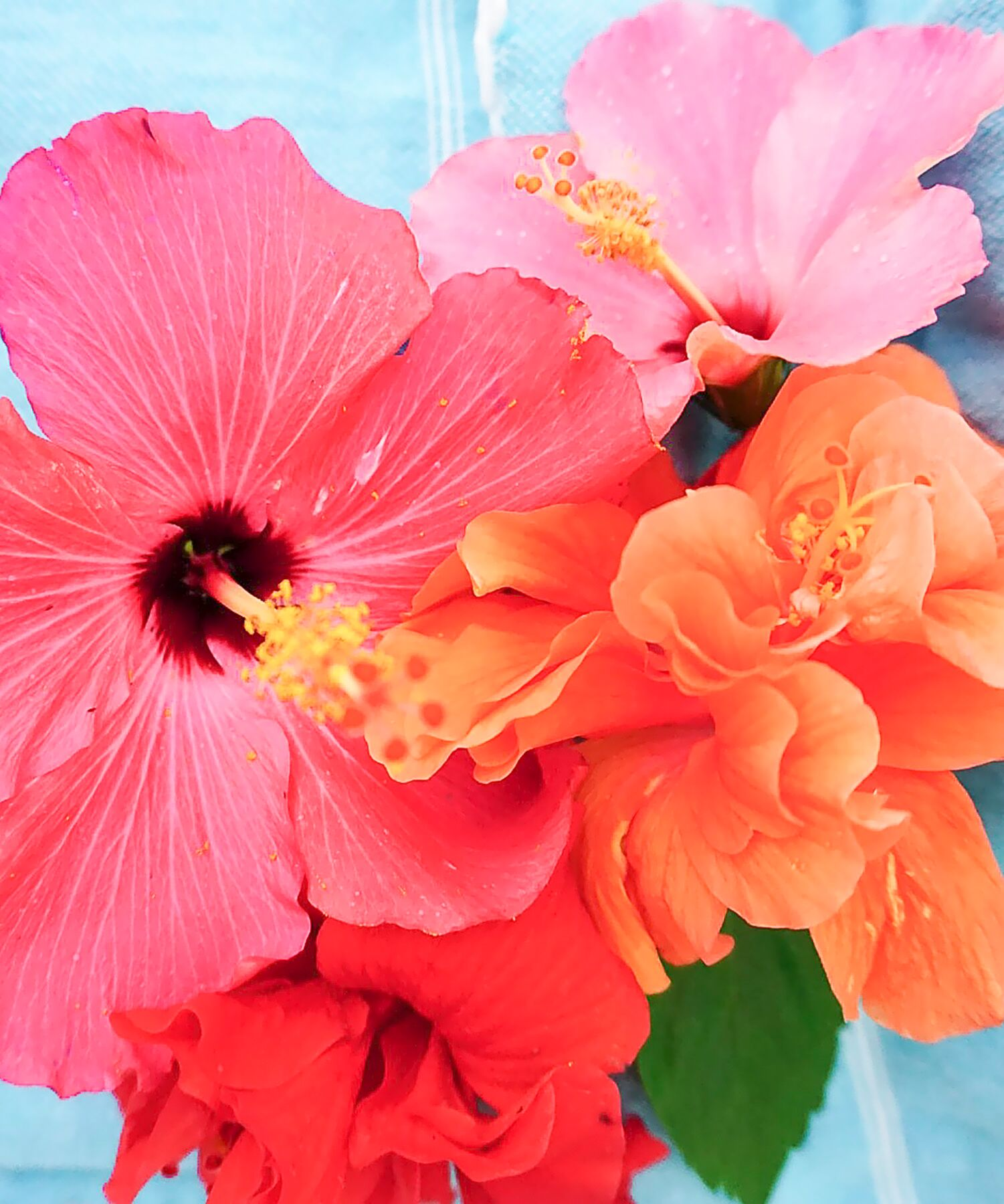 Hibiscus are always the perfect flowers for brunch! | www.ashleybrookedesigns.com