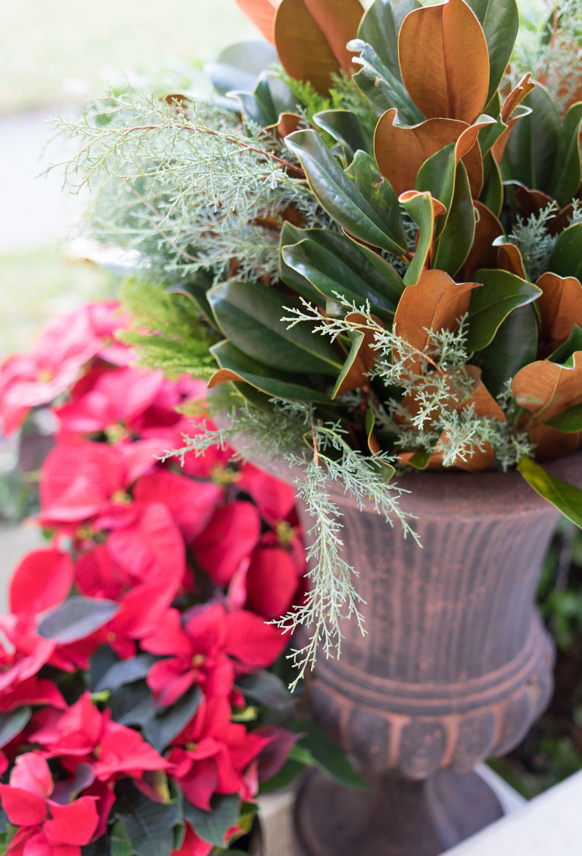 Blogger Ashley Brooke's 4 Steps to Fresh Front Door Holiday Decor   www.ashleybrookedesigns.com   Featuring: The Magnolia Company Holiday Decor
