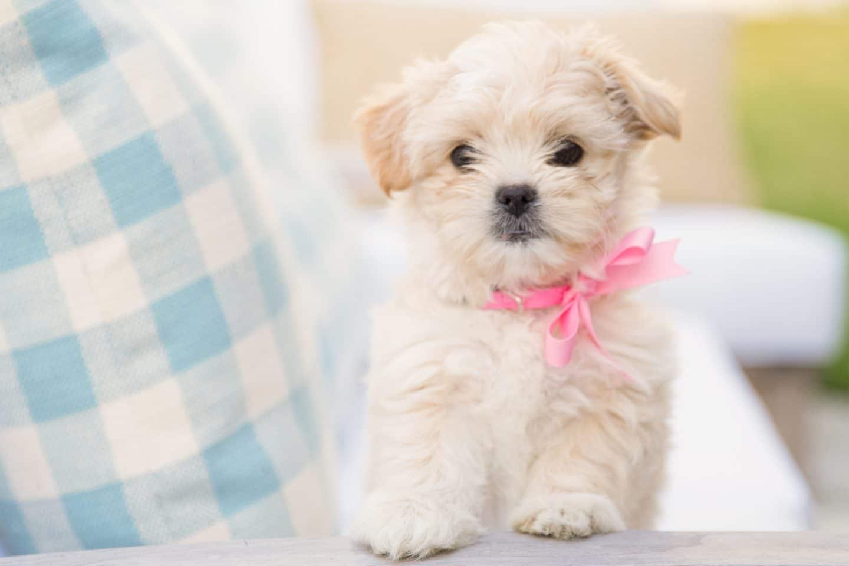 Meet Dolly (+ Video!)