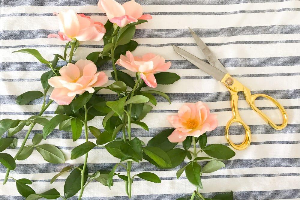 Garden Roses | www.ashleybrookedesigns.com