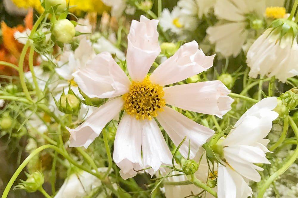 daisies | www.ashleybrookedesigns.com
