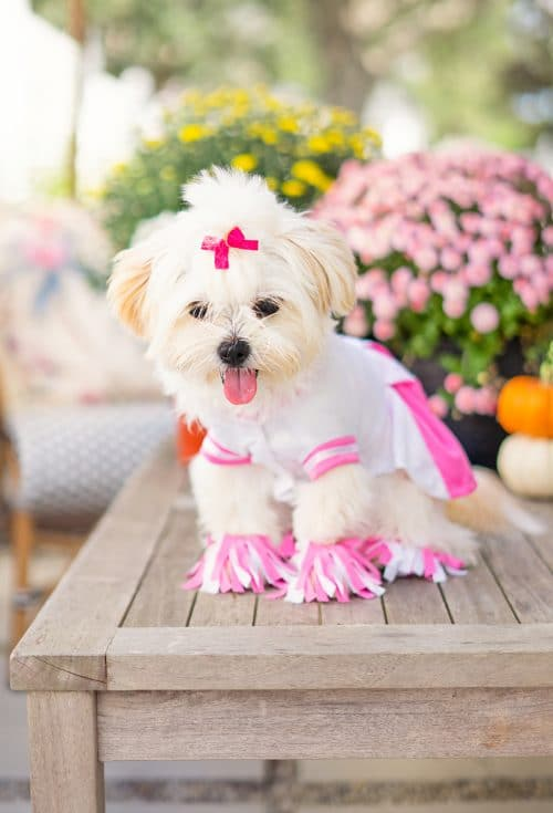 Dolly's Cheerleading Costume - Pet Costume | www.ashleybrookedesigns.com