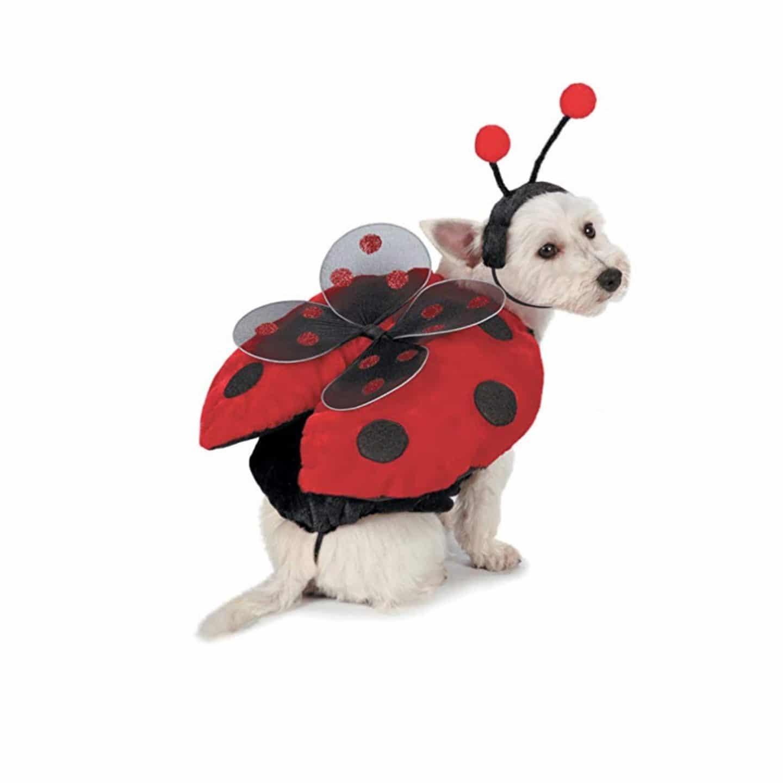 Pet Costume - Lady Bug | www.ashleybrookedesigns.com