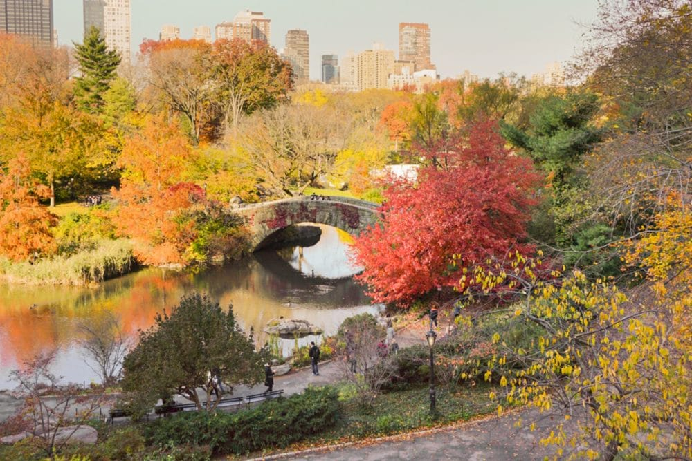NYC in the Fall - Ashley Brooke Designs