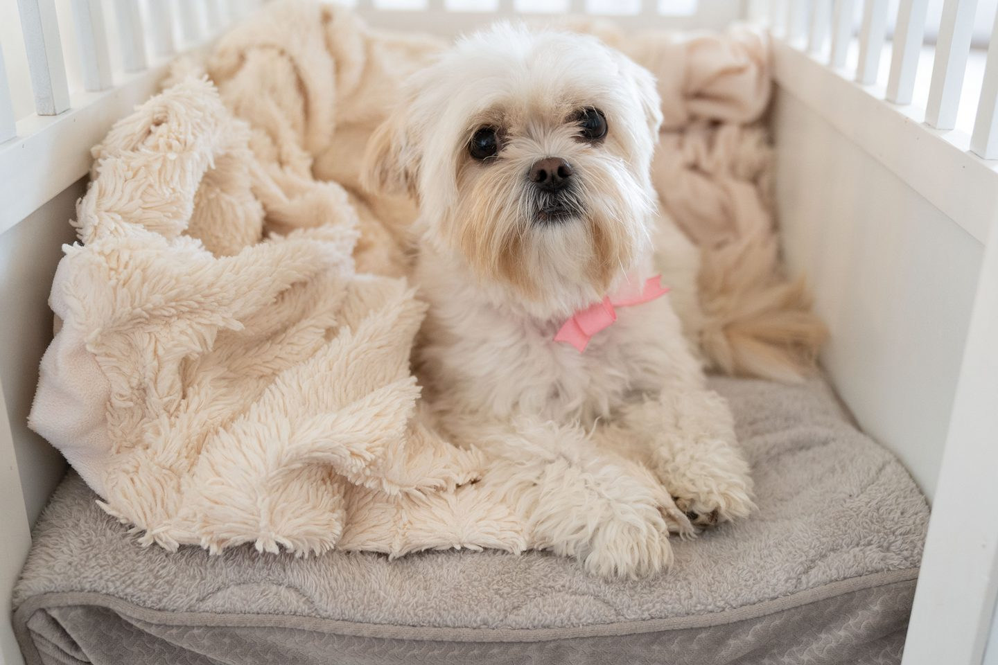 """Ashley Brooke's dog Dolly in her new """"dog house"""""""