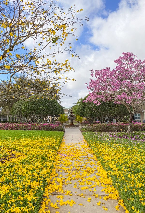 Florida in The Spring